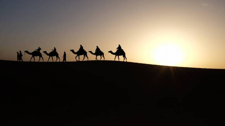 camels traveling in the dessert at sunrise