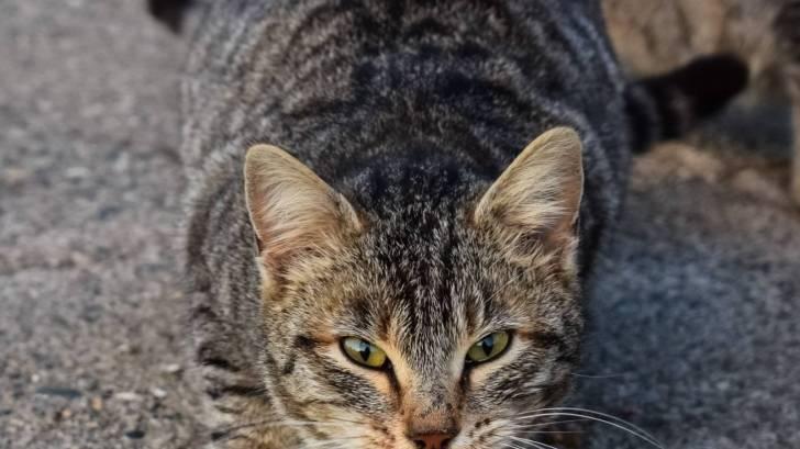 ferl street cat