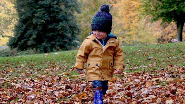 little boy walking in the fallen leaves