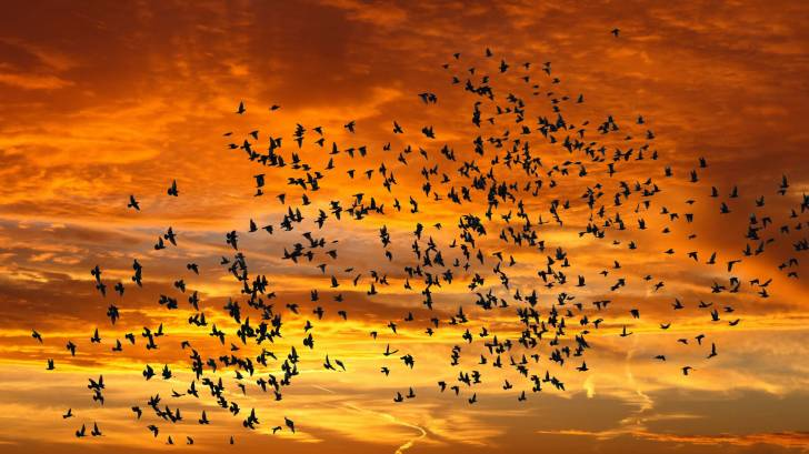 birds flying in the back ground of yellow sunset