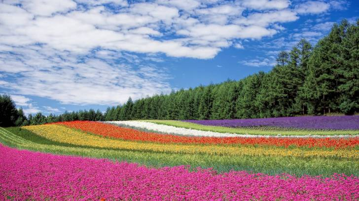 flower field of spring colors and blue sky