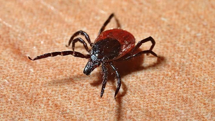 Worrisome longhorned tick spreading rapidly in US — CDC