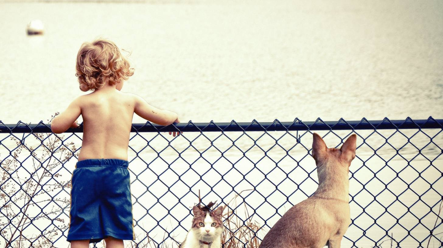 boy with his dog and cat