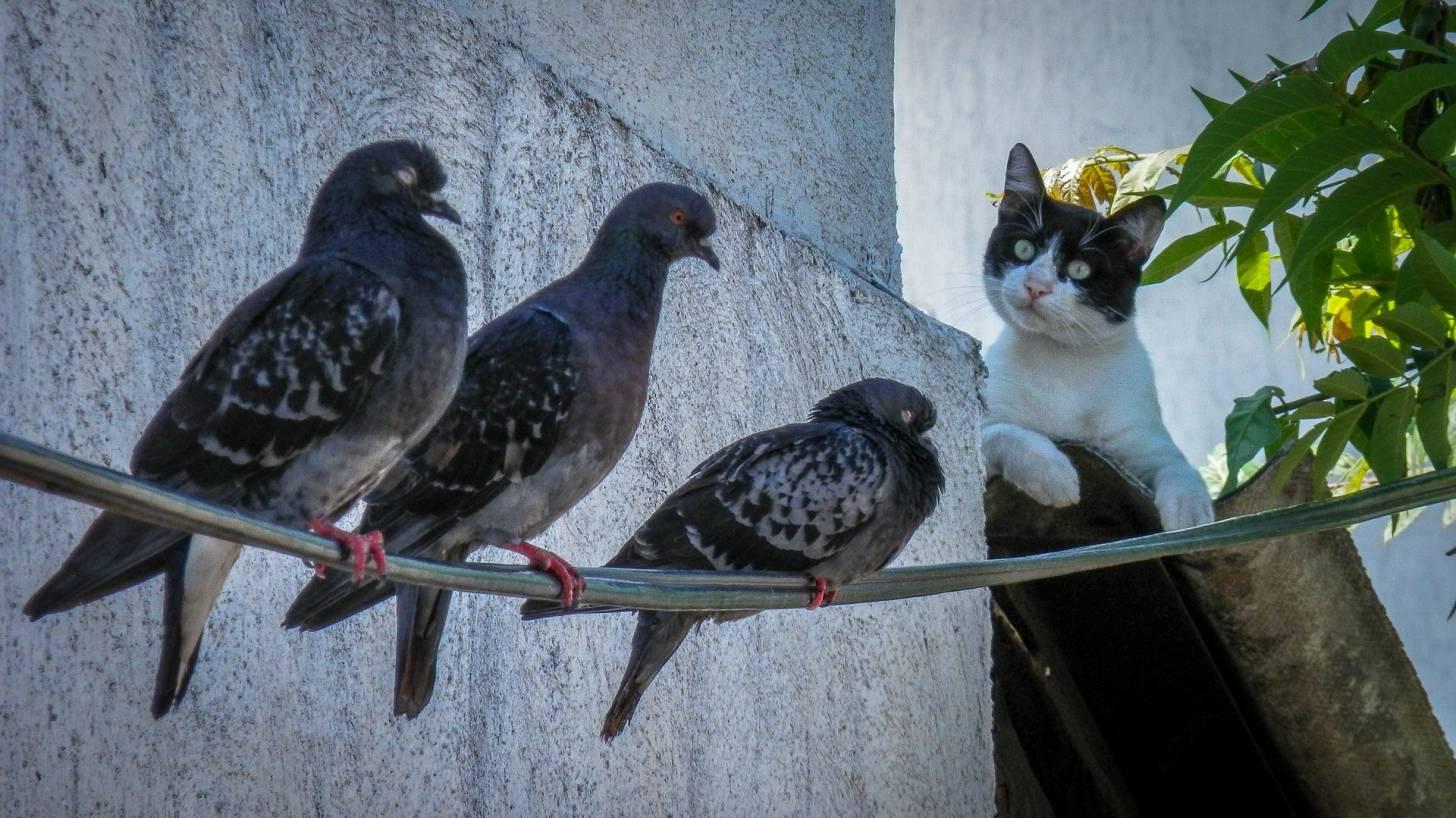 cat and bird