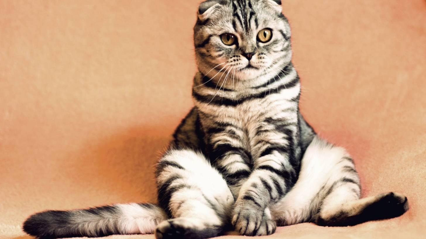 fat kitty sitting