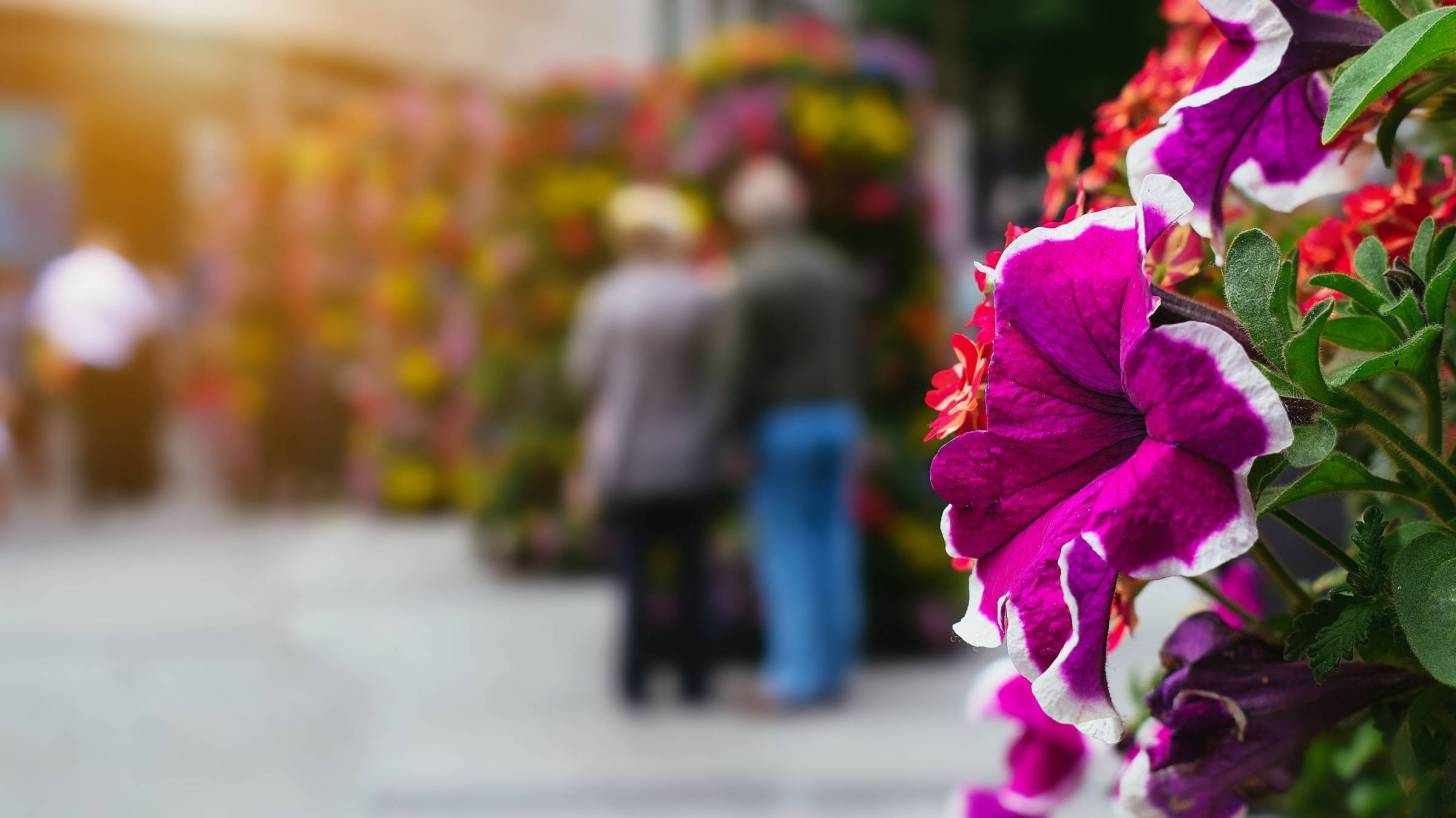 older couple in back ground with flower in the foreground