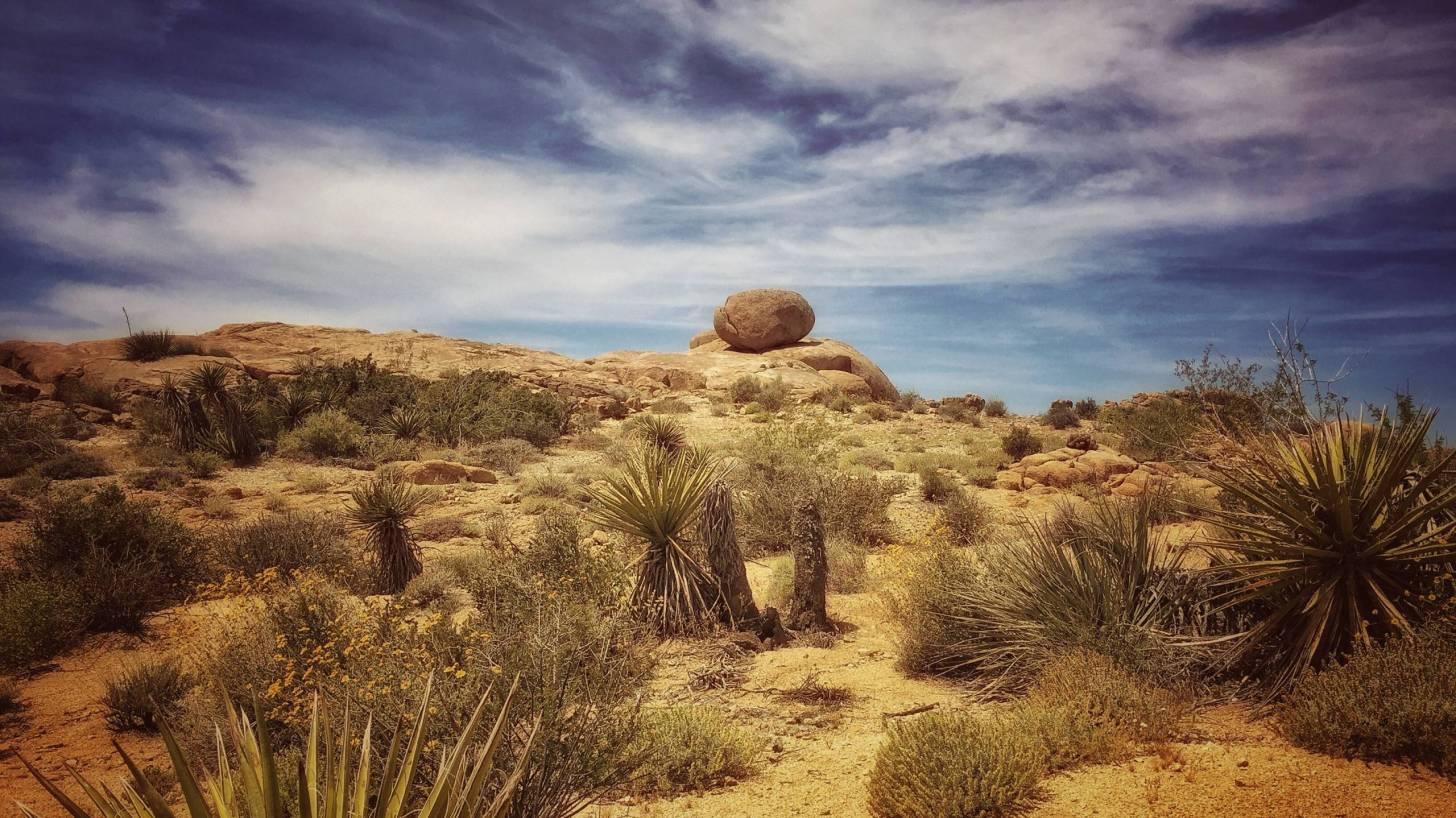 california, joshua tree, desert