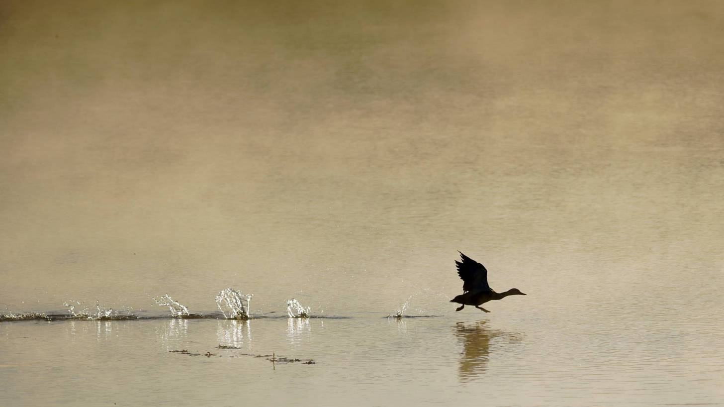 bird walking on water on a fall day