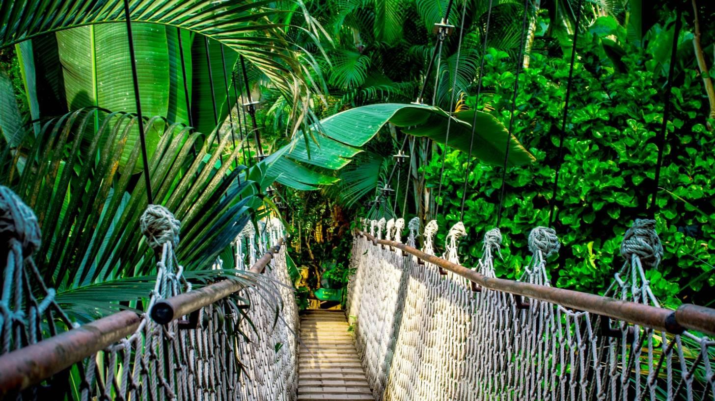 amazon forest with suspension bridge