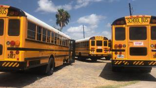 yellow school buses