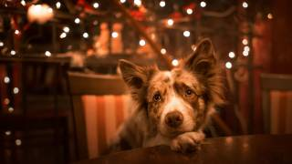 dog at night with twinkle lights