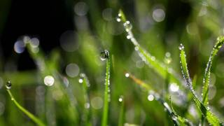 green grass with dew drops on it reflecting sun light