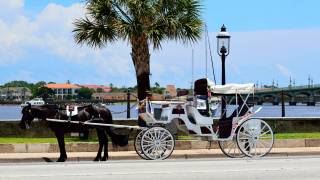 horse and carriage in st augustine florida