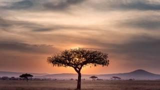 africa plains