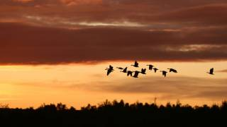 birds migrating at sun set