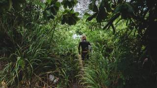 man walking thru a jungle
