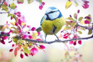 bird in a spring flowery tree