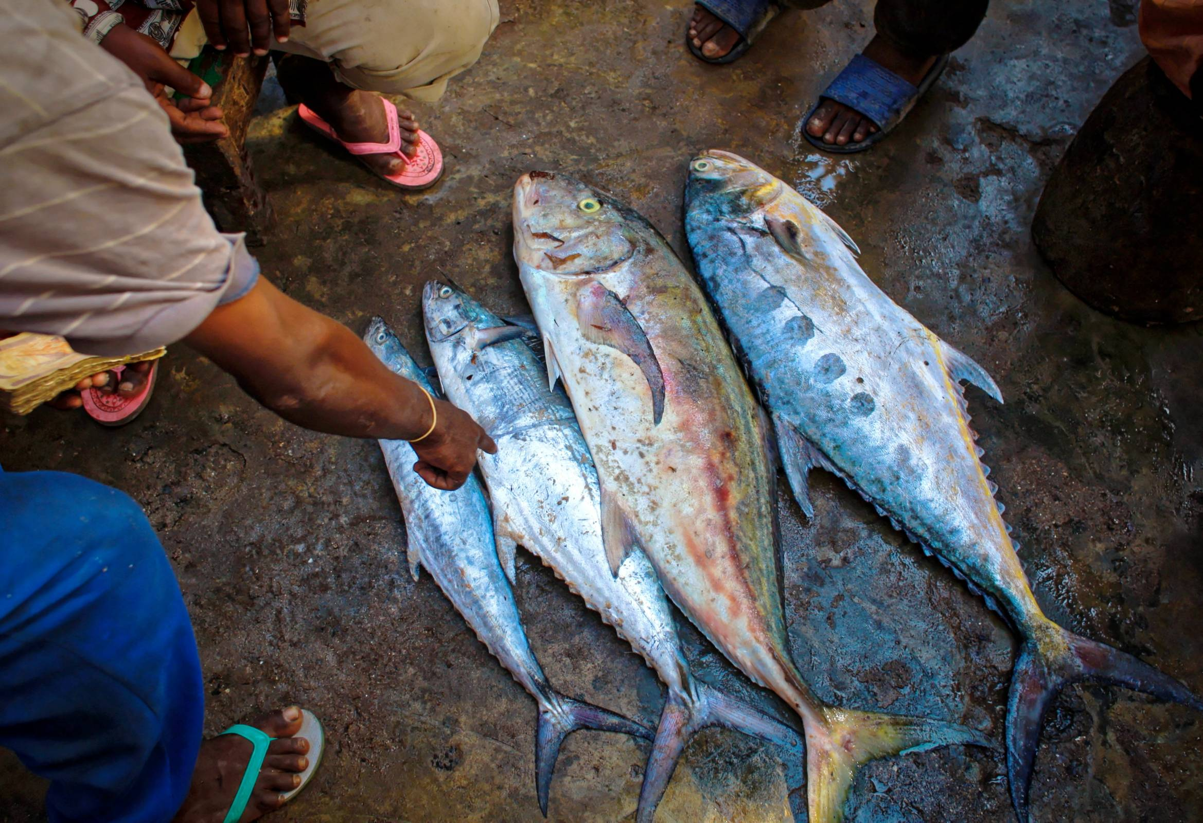 Hepatitis A Warning For Raw Tuna From Vietnam